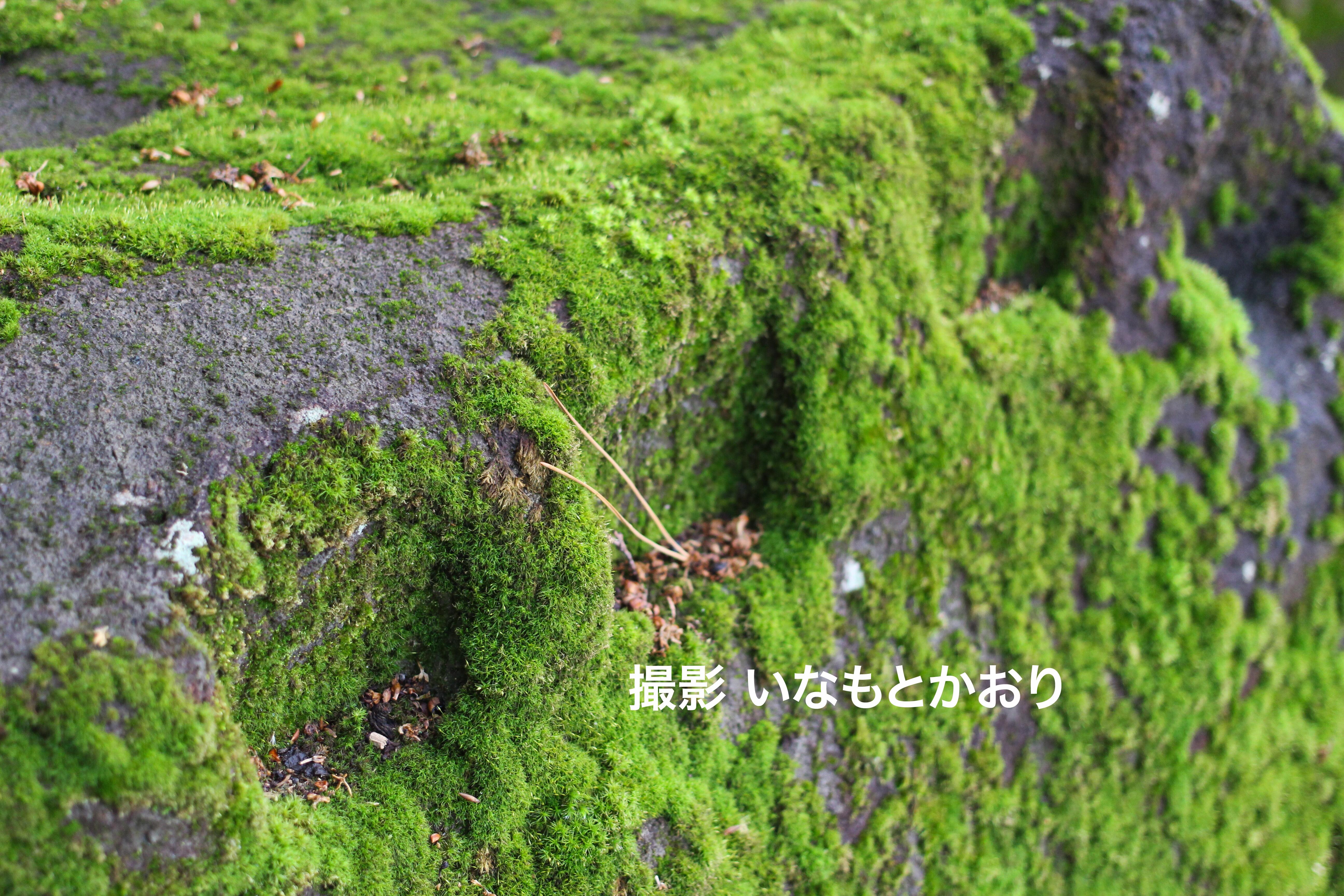 【東伊豆】江戸城を築いた3つの石丁場をめぐる